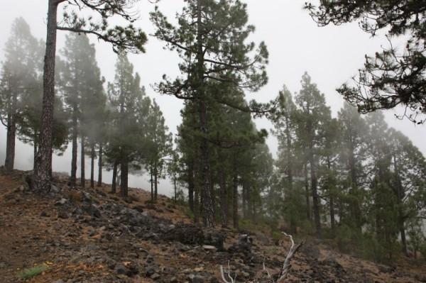 10-4 wolken door bos