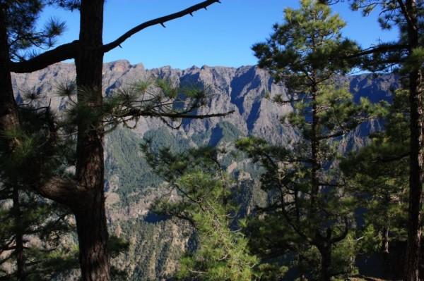11-4 cumbrecite bomen bergen