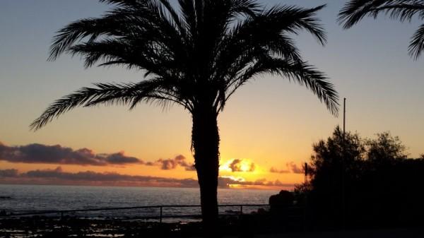 14-4 sunset palm
