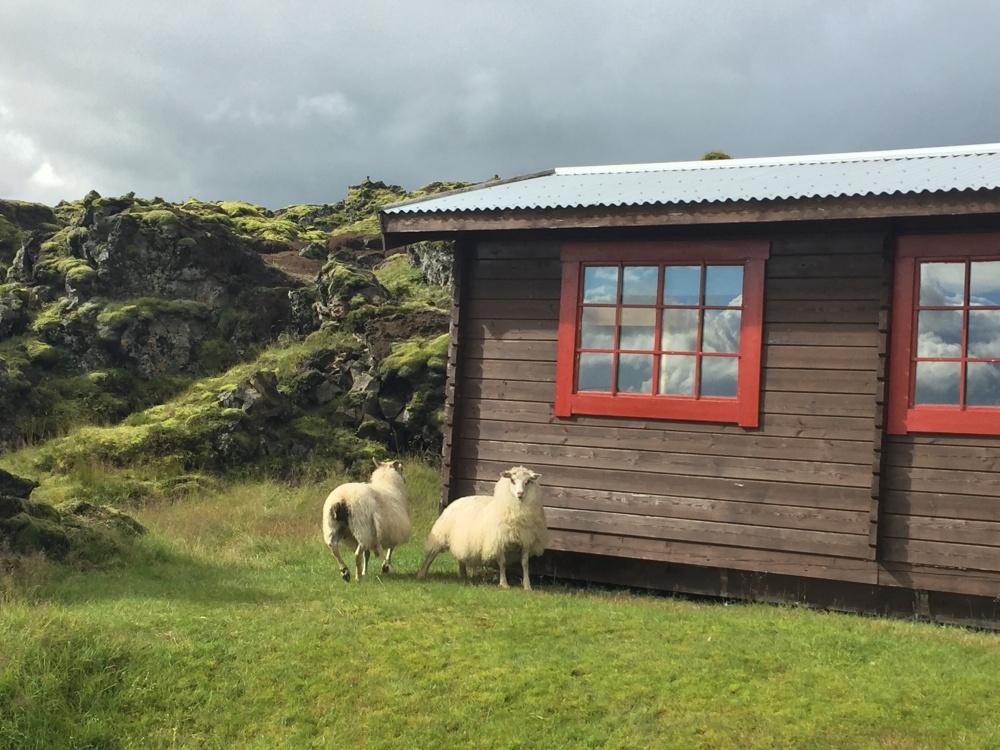 28-8 schapen huisje